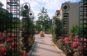 Rose trellises along the Promenade Plantee, or Coulee Verte. Photo, wikipedia